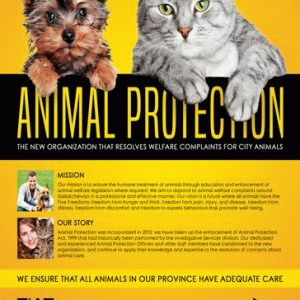 Smallpreview_animal-protection-flyer-psd-template-facebook-cover