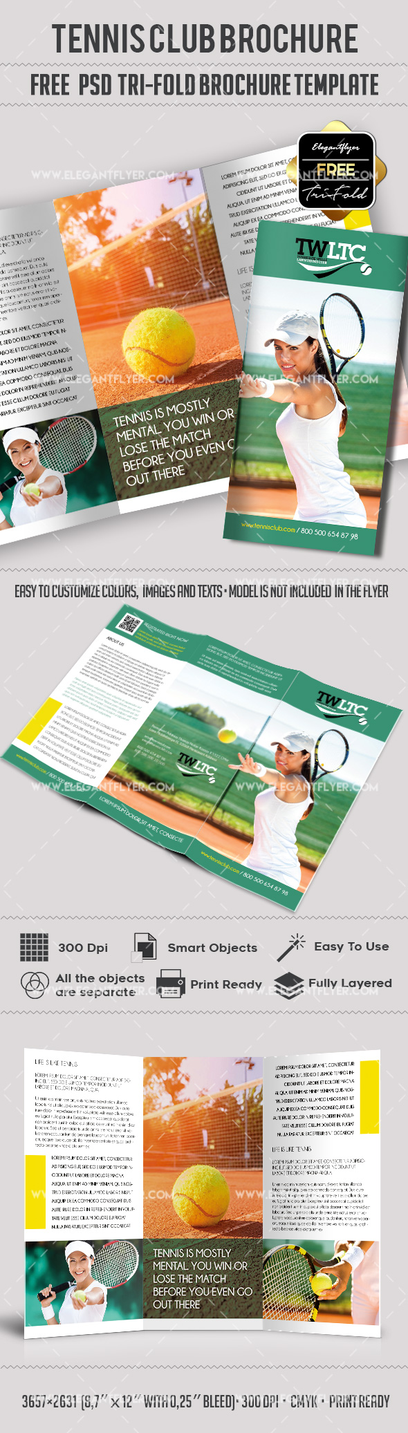 Tri-Fold Brochure for Tennis Club