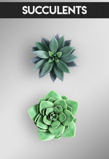 Succulents – Free 3d Render Templates