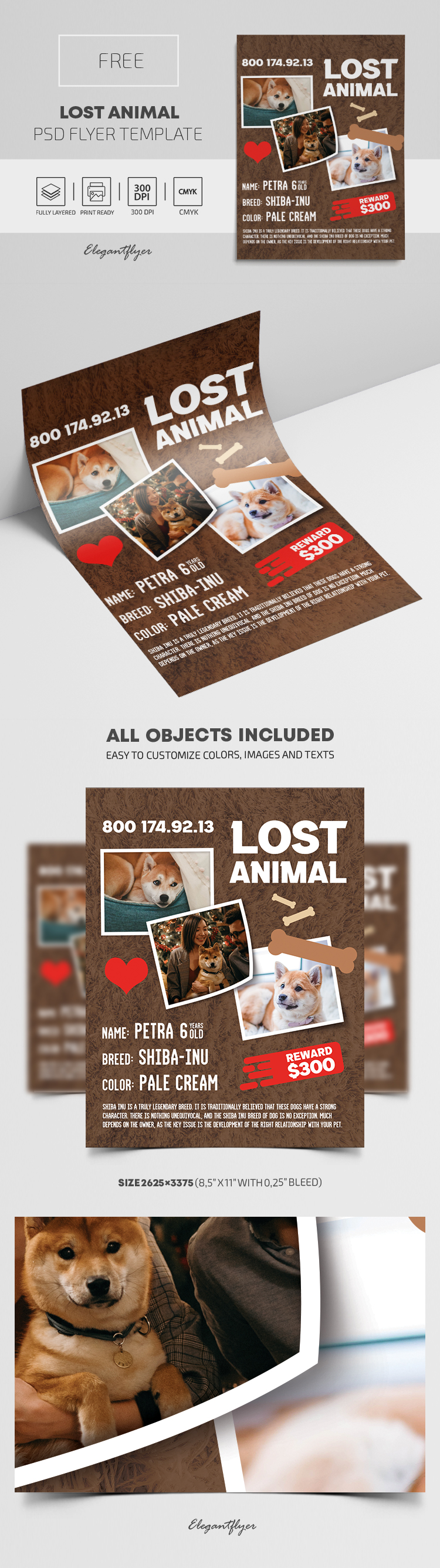 Lost Animal – Free PSD Flyer Template